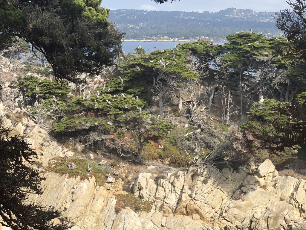ポインントロボス州立保護公園、アメリカ生活、カリフォルニア、トレイル、ペリカン