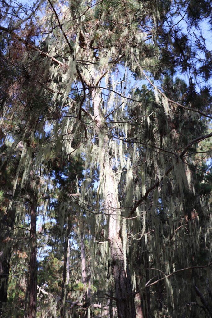 ポインントロボス州立保護公園、アメリカ生活、カリフォルニア、トレイル