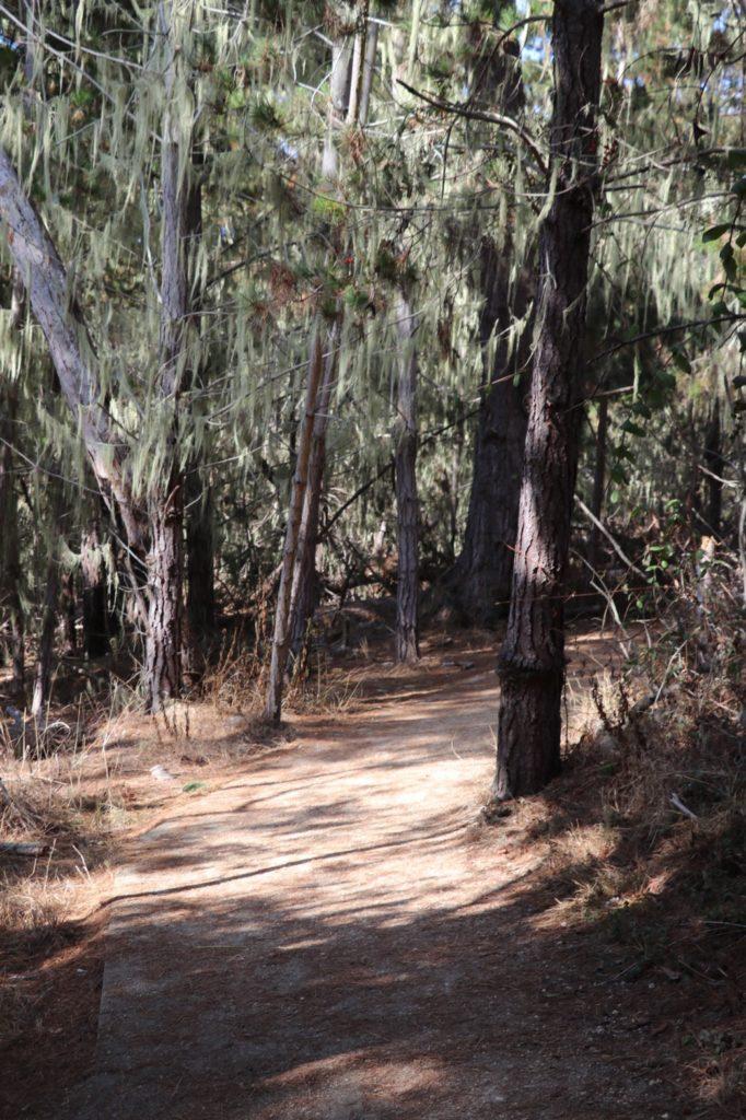 ポインントロボス州立保護公園、アメリカ生活、カリフォルニア、トレイル、エアプランツ、スパニッシュモス