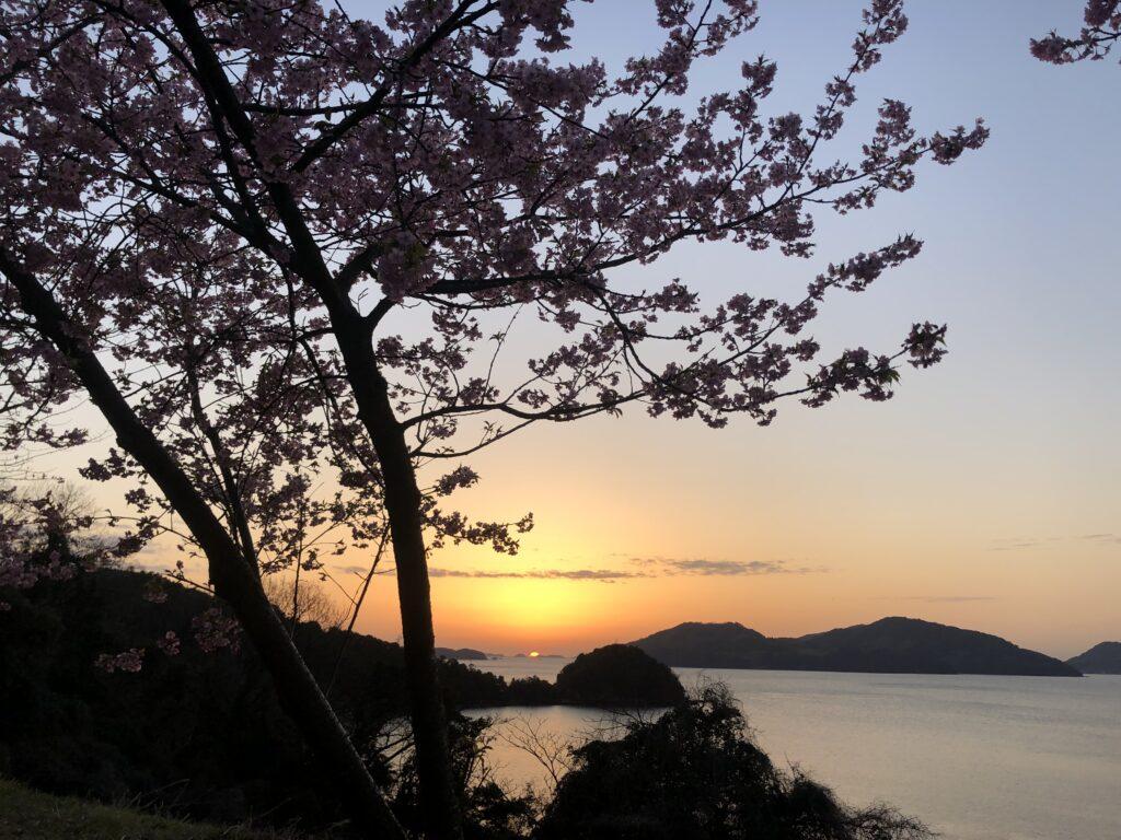 河津桜、夕日