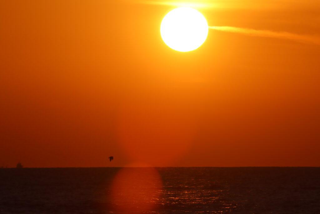 夕日、ミサゴ