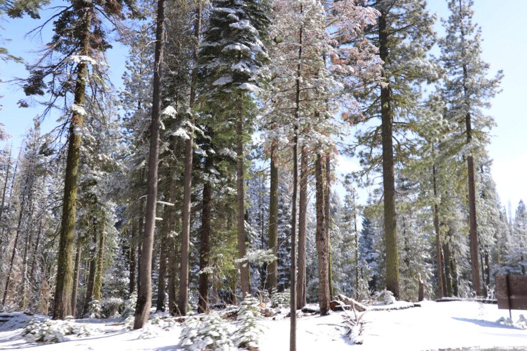 ヨセミテ国立公園、雪