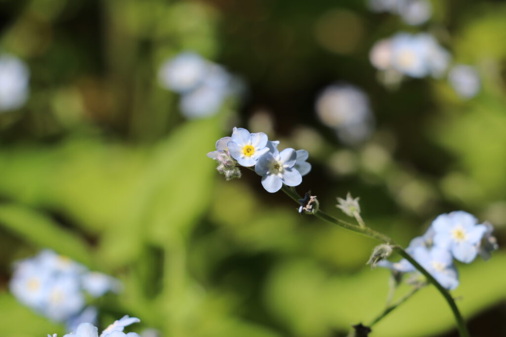 サンフランシスコボタニカルガーデン、植物園、サンフランシスコ観光、お花、植物