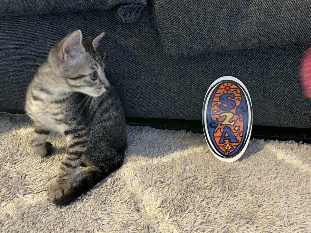 サバトラ猫、ニャンスタグラム、猫、 保護猫