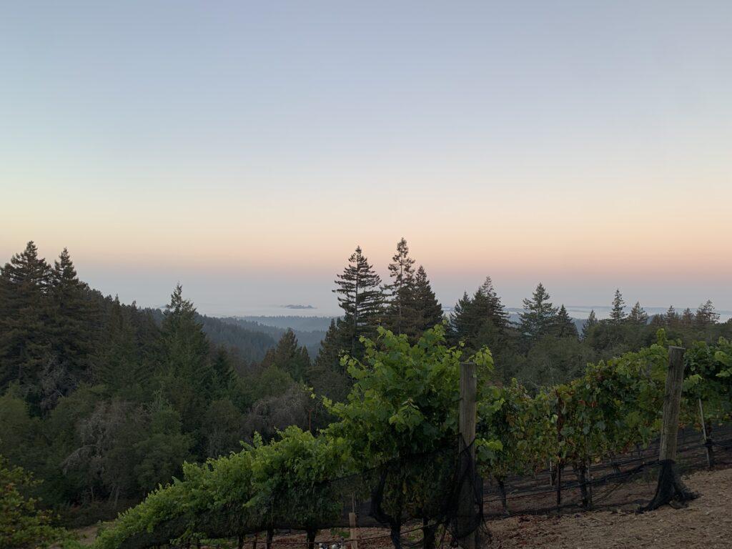 アメリカ、カリフォルニア、ベイエリア、葡萄畑、葡萄の収穫、ワイナリー、グレープピッキング